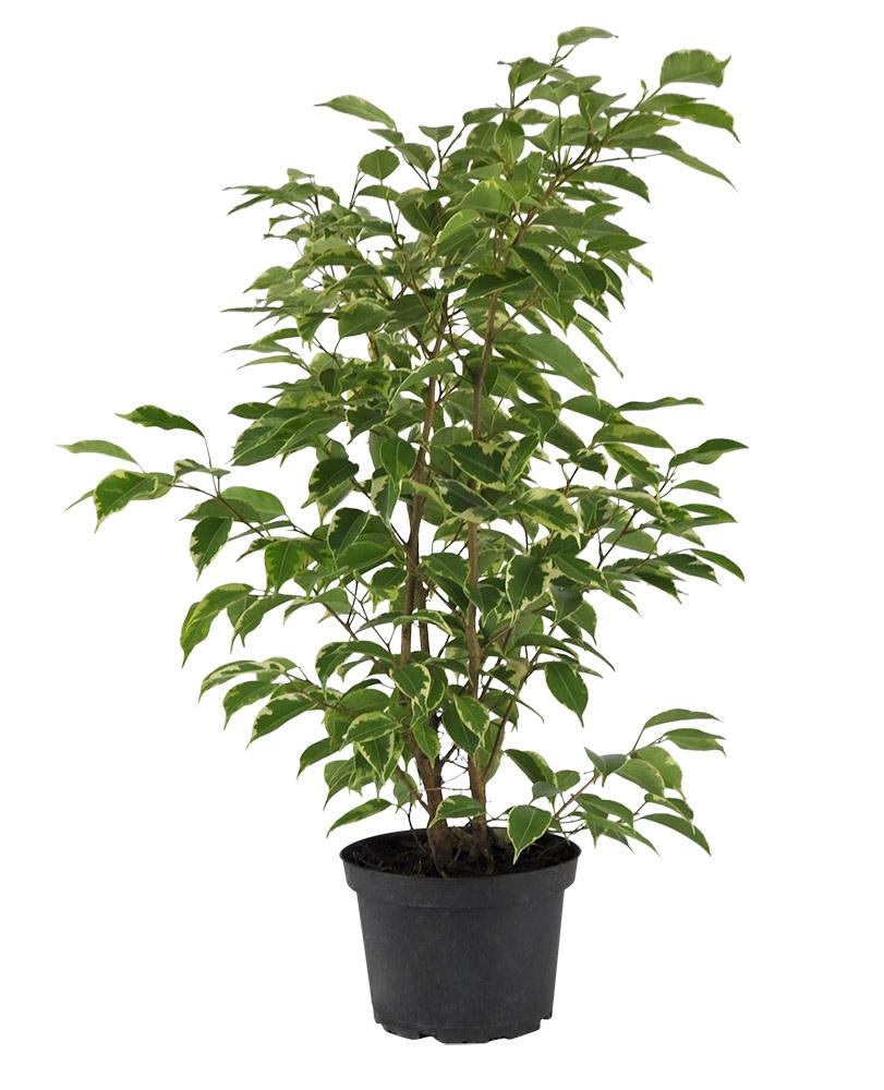 Indices Des Plantes Planterra