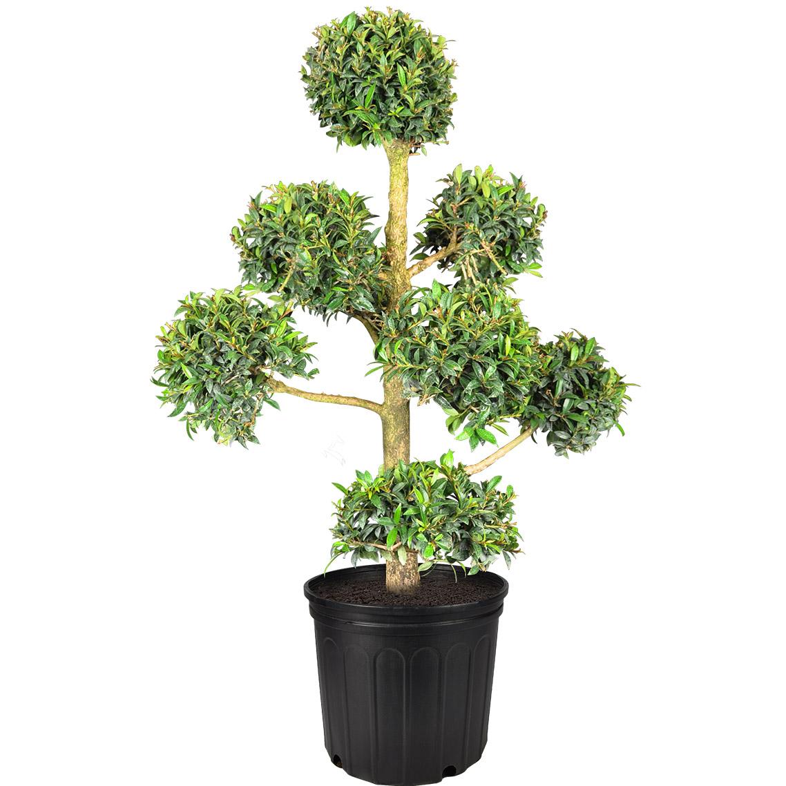 Plant Finder Planterra